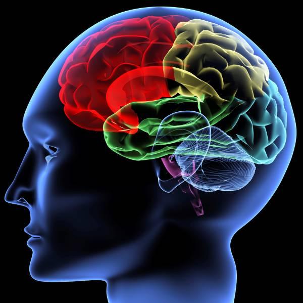 Neuro Persuasion To Help Buyers